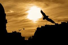Fly over Paris (Vince_Ander) Tags: street city light sunset paris france color sunrise canon eos europe cityscape walk streetphotography sigma explore colored streetphoto coucherdesoleil leverdesoleil 70d explored inexplore platinumheartaward inexplored canoneos70d eos70d