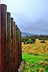 Wood Posts (jacscot) Tags: fujifilm lochlomond carrick fuiji x100s