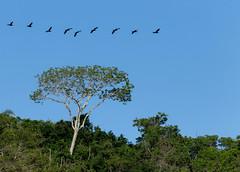 lagoa (1 of 1)-8 (2) (beckstei) Tags: wild brazil cliff mountain lake reflection tree bird net nature water brasil riodejaneiro landscape boat fisherman wildlife lagoon cormorant lagoa marica