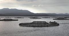 Feeding the Fish 2015-03-22 (IMG_8767) (ajhaysom) Tags: australia tasmania strahan macquarieharbour canon24105l canoneos6d