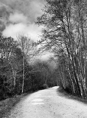 There's a storm brewing (JulieK (thanks for 8 million views)) Tags: trees ireland blackandwhite bw irish woods scenery path cork hdr munster donerailepark htmt iphone4 ilobsterit