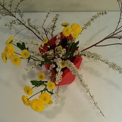 Mrunmayi's #ikebana , all angles