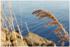 Almere: Gooimeer (H. Bos) Tags: city water spring natuur lente flevoland stad almere gooimeer almerehaven flevopolder