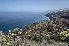 Tenerife costa norte (letrucas) Tags: tenerife vegetacin islascanarias ocanoatlntico cieloynubes tabaiba euphorbiabalsamifera palmacanaria costanortedetenerife