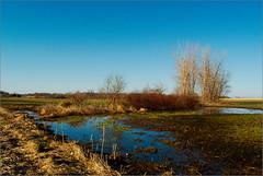A View from Dow Road (joeldinda) Tags: trees field raw michigan farm swamp • joeldinda sunfield 1v1 yesiliketotellstories