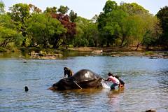 DSC_0141_2 (drs.sarajevo) Tags: india karnataka madikeri kaveririver dubareelephantpark