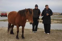 wild pony (Beau Finley) Tags: statepark wild horse bokeh maryland pony assateagueisland assateague wildpony beaufinley