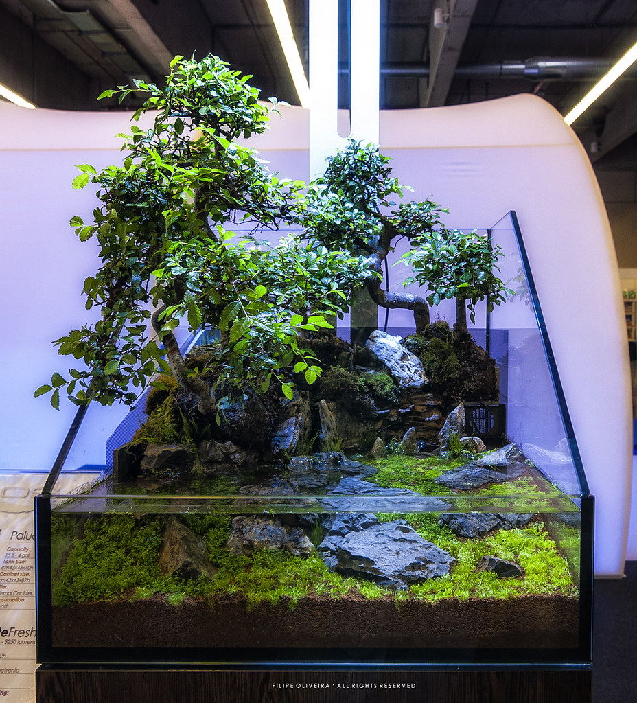 The World's Best Photos Of Bonsai And Elos