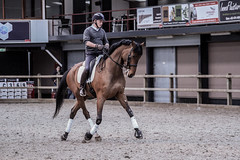 IMG_0169 (Lisa-Marie Art & Photography) Tags: horse netherlands dutch animal sport canon photography equine dressage