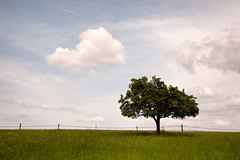 (Vitatrix) Tags: outdoor natur silhouette baum wolken himmel wiese bewlkung pflanze