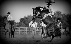Juliano Souza (Eduardo Amorim) Tags: gacho gachos gaucho gauchos cavalos caballos horses chevaux cavalli pferde caballo horse cheval cavallo pferd crioulo criollo crioulos criollos cavalocrioulo cavaloscrioulos caballocriollo caballoscriollos pampa campanha fronteira bag riograndedosul brsil brasil sudamrica sdamerika suramrica amricadosul southamerica amriquedusud americameridionale amricadelsur americadelsud cavalo         hst hest hevonen  brazil eduardoamorim gineteada jineteada