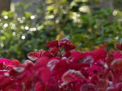 Algumas de hoje  #bestoftheday #nature #pic #picoftheday #park #kodak #city #bird #green #verde #sun #afternoon #sescinterlagos #club #sesc #interlagos #loucosporfotos #viciofotografico #hobby #fotografando #fotos #album#flowers  (patriciabevenuto) Tags: park city flowers sun verde green bird nature club afternoon kodak album pic hobby fotos interlagos picoftheday sesc fotografando sescinterlagos bestoftheday viciofotografico loucosporfotos