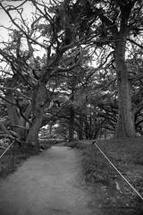 Into the woods (itsmegracie7) Tags: woods fujifilm fujinon fujilove fujifilmx fujifilmxseries