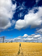 Kay and a Field of Gold (Gee & Kay Webb) Tags: mtb mountainbiking bike giant ffield pylons sky clouds blue yellow england trails countryside outdoor xcountry crosscountry