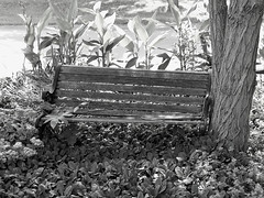 Old Bench (Photo Squirrel) Tags: bench flowers flower beds tree monochrome