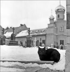 011-09-22      (Yuriy Sanin) Tags:              yuriy sanin film cat monastery church snow 6x6 medium format