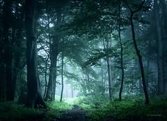 Fairy Woods (b_schaulich) Tags: wood forest germany niedersachsen fog mist nebel sommer summer hankhausen