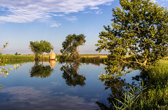 Els fondents (ancoay) Tags: fondents panta aigua paisatge landscape water swamp reflejo reflection reflexes ancoay canon600d 7dwf