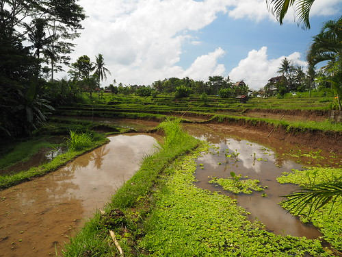 Bali 2016 Ubud