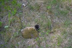 DSC_0593 (porkkalanparenteesi) Tags: hyltty bunkkeri soviet bunker kirkkonummi porkkalanparenteesi