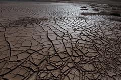 mud cracking at Hverir (nervous system) Tags: crackingpatterns crackedmud cracking cracks hverir geothermal iceland myvatn northeast is