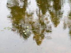 Pond II (schauplatz) Tags: regen spaziergang stuttgartrohr pond tmpel teich spiegelbild laub rain