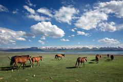 Kyrgyz-(1) (Pascal Mannaerts) Tags: asia centralasia travel silkroad people portrait culture landscape
