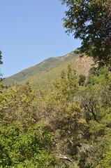 DSC_0397 (oblomberg) Tags: bigsur hwy1 pfeifferstatepark montereyca