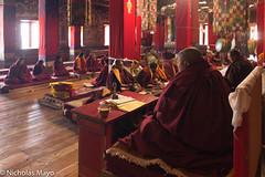 Chanting At Galden Namgyal Lhatse (Nick Mayo/RemoteAsiaPhoto) Tags: india festival bell monk tawang chanting arunachalpradesh monpa