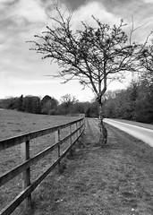 Pathway in Doneraile Park (JulieK (thanks for 8 million views)) Tags: ireland blackandwhite bw irish tree clouds fence landscape scenery path cork hdr munster hff donerailepark iphone4 ilobsterit