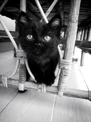 (amrahmedalii) Tags: pet white black nature beautiful beauty animal collage mystery cat wonderful amazing pretty photos picture mysterious devil incredible wondering iphonography