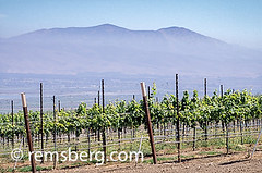 CALIFORNIA - View of Salinas Valley from vinyards that line the hillsides (Remsberg Photos) Tags: california usa mountains beautiful landscape vineyard view wine farm peaceful salinas grapes salinasvalley hillsides