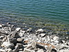 024-06 USA, Washington, Grand Coulee, Banks Lake Edge (Aristotle13) Tags: wa bankslake grandcoulee washingtonstate 2007 usavacation