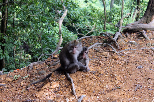 20150224_110335 Pusuk Monkey Forest, Lombok