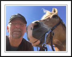 Saar op haar paas-best (gill4kleuren - 12 ml views) Tags: horse me sarah fun saar paard haflinger