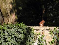 C'tait bon! (bertrand kulik) Tags: nature squirrel fort cureuil