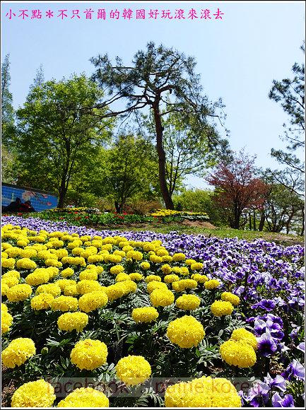 高陽國際花卉博覽 (23).JPG