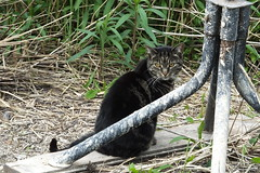 Cat by the Bure (Moldovia) Tags: pet animal cat feline outdoor catalog catpix bridgecamera catspotting catmoments catnipaddicts catsunleashed fujifilmfinepixhs50exr