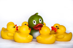 Pato rodeado. Surrounded duck (thaisa1980) Tags: yellow toy goma ducks amarillo surrounded rubberducks juguete patos patitos rodeado