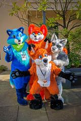 VF 2015 Day 4 Card 7 099sfx (Univaded Fox) Tags: canada hotel furry wolf columbia fox convention friendly burnaby british dexter gusty executive 2015 fursuits sairys vancoufur univaded
