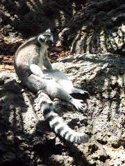 DSCF0301 (Stonehenge 68) Tags: zoo birmingham snake alabama lizard plantation antebellum birminghamzoo arlingtonhouse