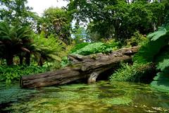 2016.07.014 Abbotsbury (67) (Kotatsu Neko 808) Tags: uk england gardens dorset subtropical abbotsbury abbotsburysubtropicalgardens
