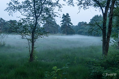 Foto-20160723_220229-JWmWM-70 (jacobwaterweg) Tags: waschkolk bos mist