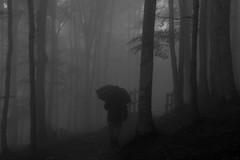 Dark walker (ramosblancor) Tags: humanos humans naturaleza nature bosque forest lluvia rain paraguas umbrella oscuro dark inquietante disturbing urbia paseante walker pasvasco blancoynegro blackandwhite bw