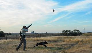 Uruguay bird hunting 40