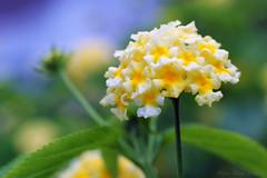 IMG_7795 (nelson_tamayo59) Tags: flores jardin naturaleza tenerife canarias