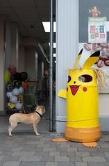 The wait (David Bergin Photography) Tags: ireland nikon pokemon scarecrow bin tied waiting colour shop doorway entrance dog
