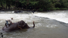 the very best of laos-26 (MrPepeGrillo) Tags: laos elefante boloven bolaven plateau