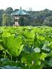 P1130584 (Stop carbon pollution) Tags: japan 日本 honshuu 本州 kantou 関東 toukyou tokyo 東京
