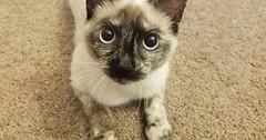 Just got spayed doc gave her the good stuff! via http://ift.tt/29KELz0 (dozhub) Tags: cat kitty kitten cute funny aww adorable cats